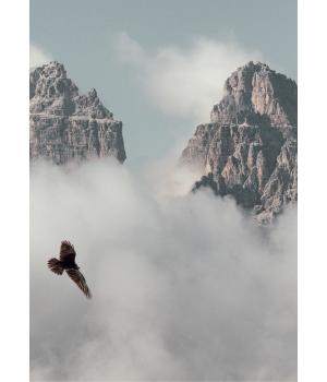 Kort: Ørnen